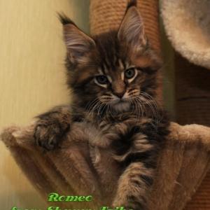 romeo-23-01-2012-4